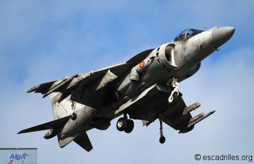 Harrier espagnol