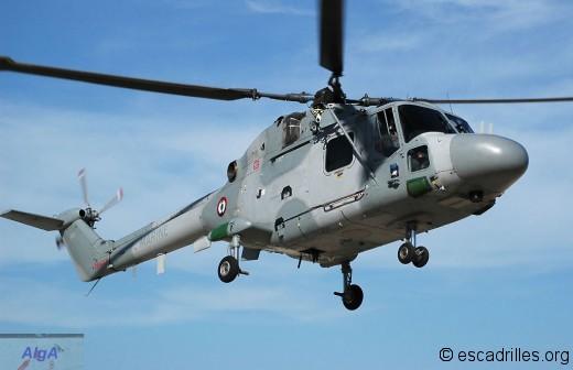 Le Lynx 808 de la 31F
