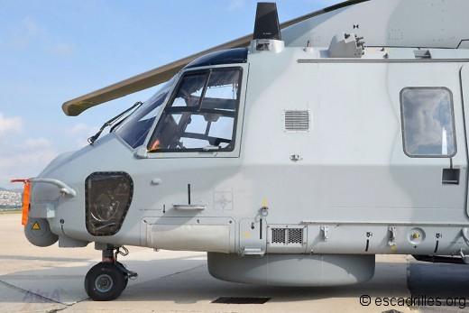 Caiman insigne 31F