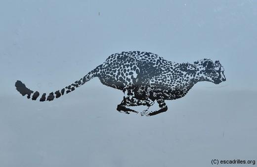 Cheetah_5345