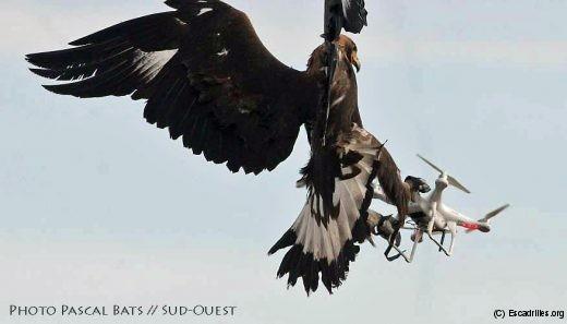 L'Aigle royal finalement choisi pour équiper l'escadron
